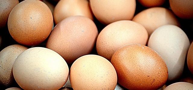 Waneer is een ei een biologisch ei?